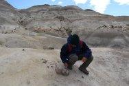 Fossilized Dinosaur poop?