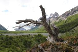 Trek to Laguna Torre from Poincenot Campgroud