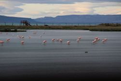 Flamingos at Laguna Nimez Nature Reserve
