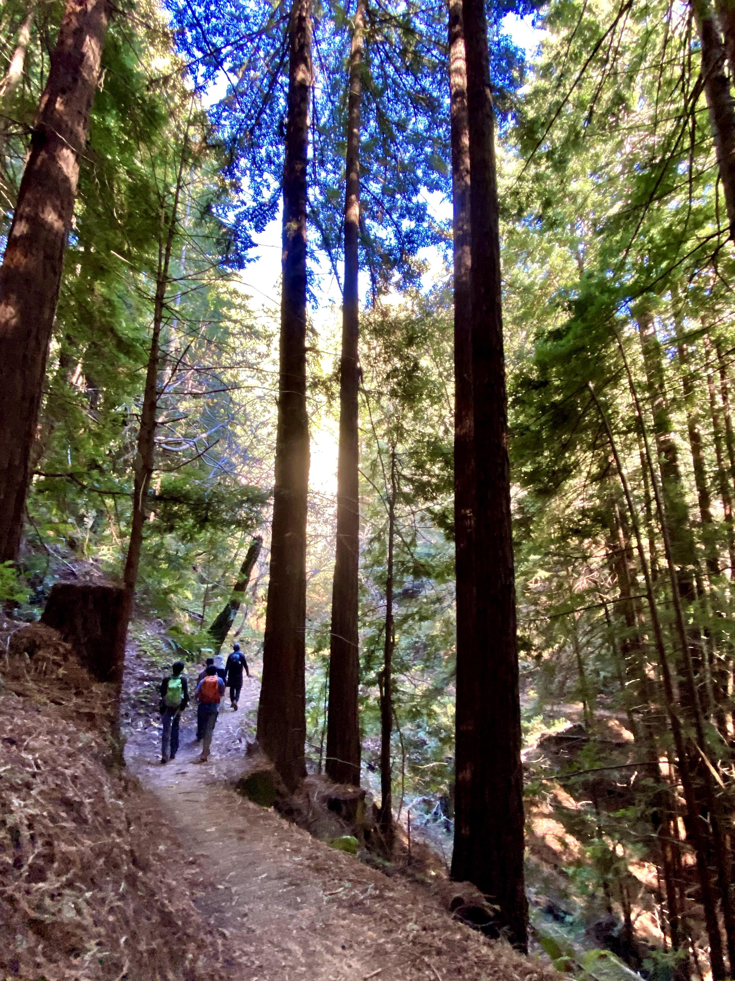 Purisima Coastal Redwoods