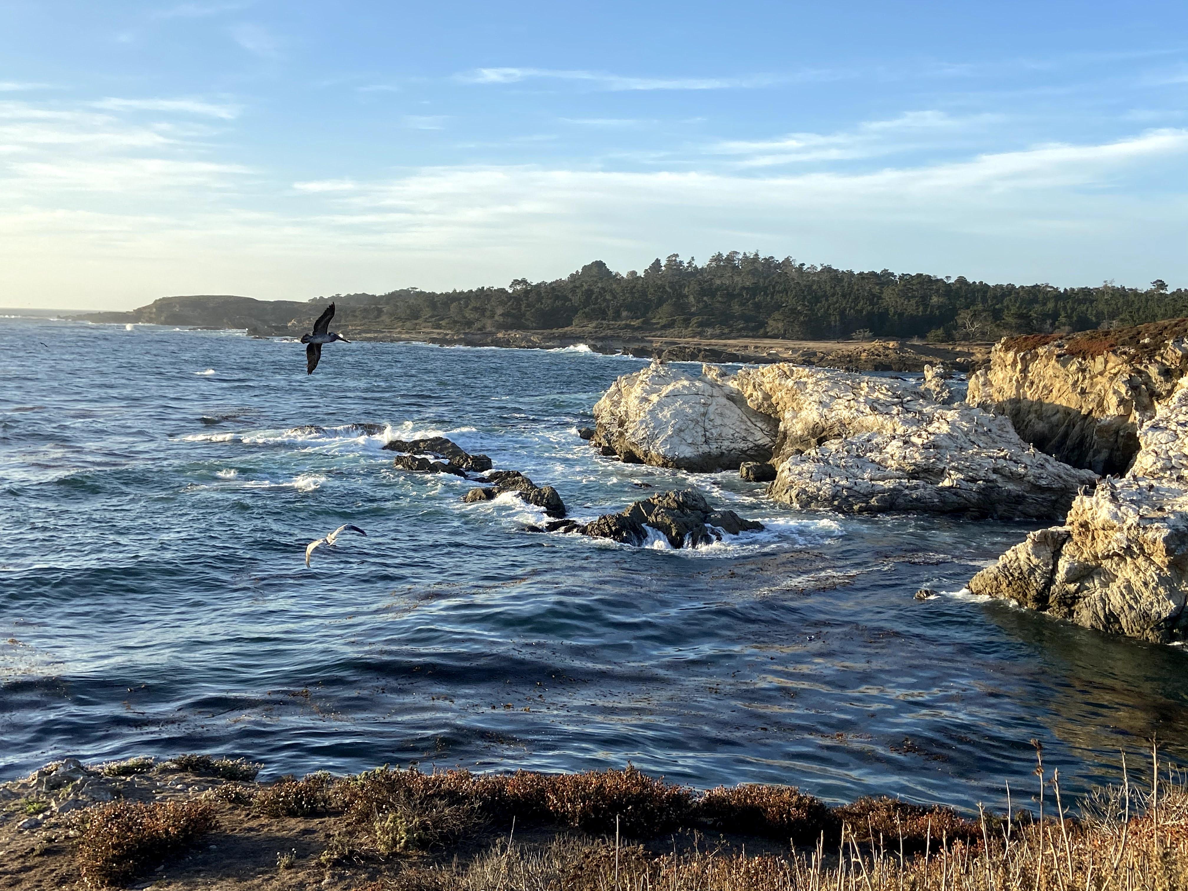 Pacific Coast, Monterey to Big Sur